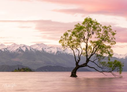 Travel-Photography-Wanaka-NewZealand-Landscape-Tree-ThatWanakatree